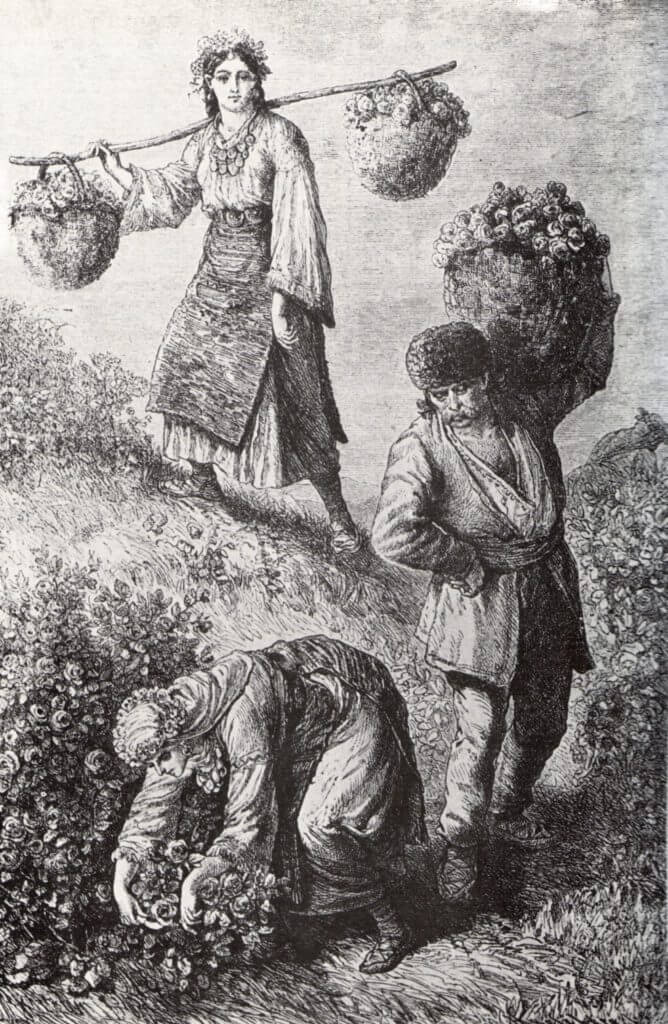 Rose pickers of the olden times