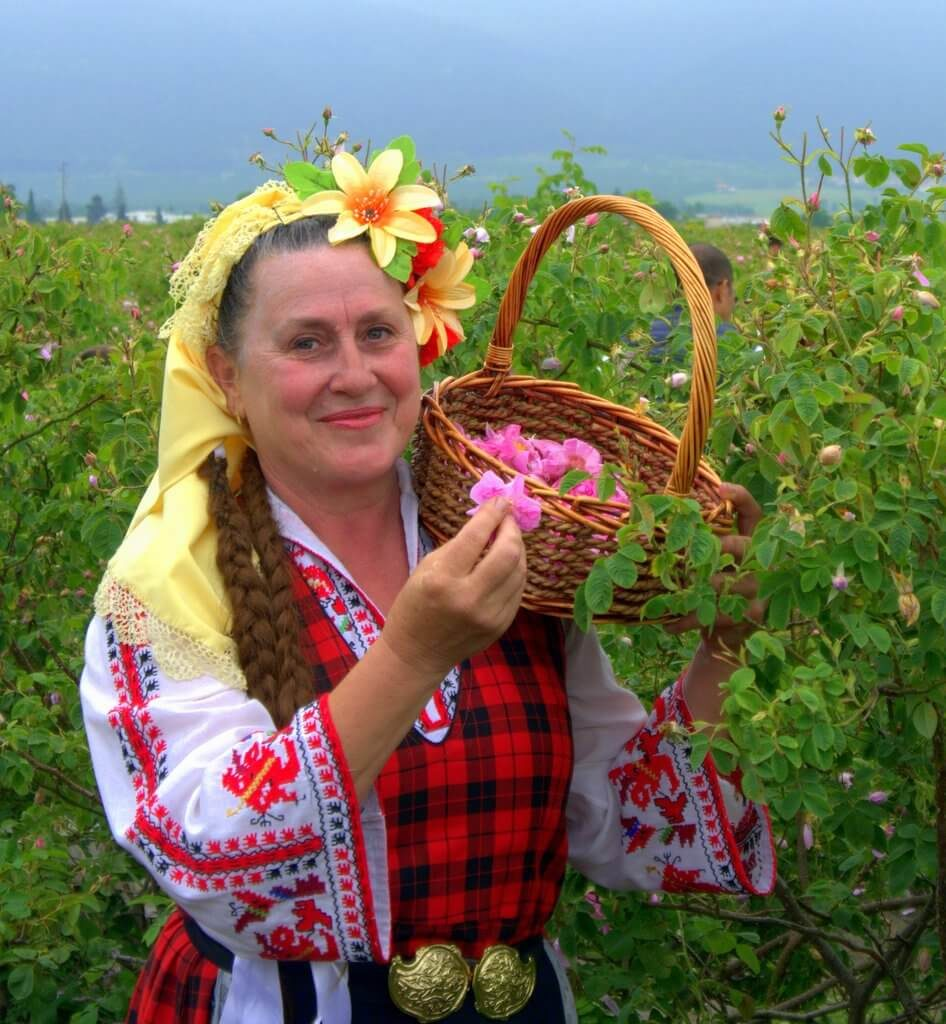 Rose picker in traditional Bulgarian folklore clothing near Kazanlak, Bulgaria (during rose picking ritual event)