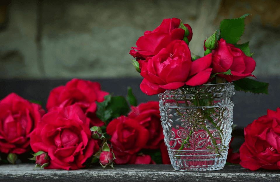 Why Are Red Roses Considered Romantic? Symbol of Love