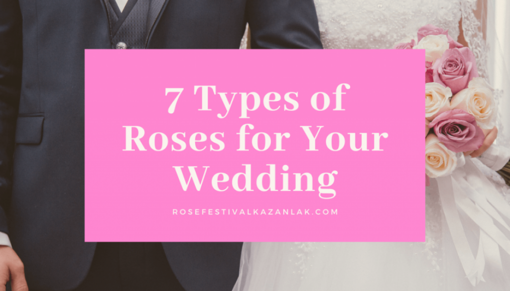 7 types of roses for your wedding (1)