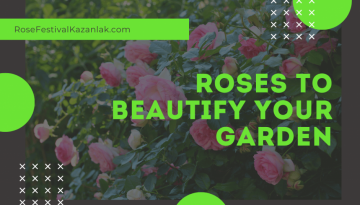 Types of roses for your garden - featured image
